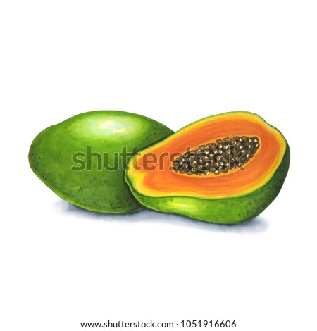 Papaya fruit on white background sketch stock illustration papaya fruit on a white background sketch done in alcohol markets you can use m4hsunfo