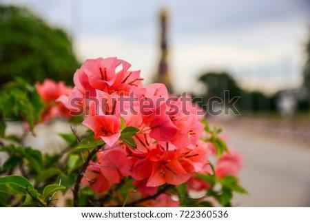 Paper flower thailand stock photo edit now 722360536 shutterstock paper flower in thailand mightylinksfo