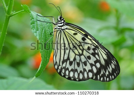 Stock images royalty free images vectors shutterstock for White paper butterflies