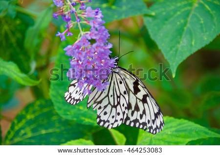 Paper kite butterfly on purple flowers stock photo royalty free paper kite butterfly on purple flowers mightylinksfo