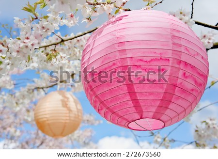 Paper lanterns decorated for a traditional Japanese cherry blossom celebration hanami