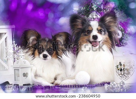 Papillon dog butterfly - stock photo