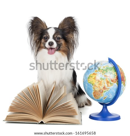 Papillon with a globe and a book isolated on white background - stock photo