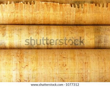 papyrus - stock photo