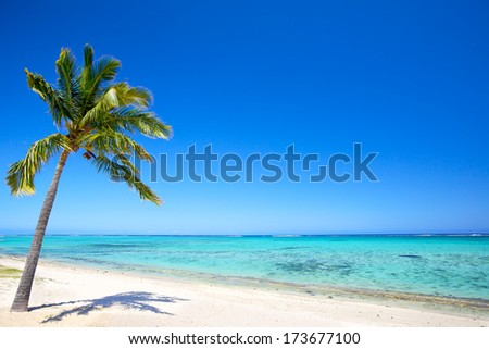 Paradise beach and palm tree  in tropical island - stock photo