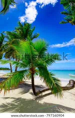 paradise beach beautiful white sand with palm tree on a blue sky background with white clouds resort on an island of the Caribbean sea of Dominican Republic