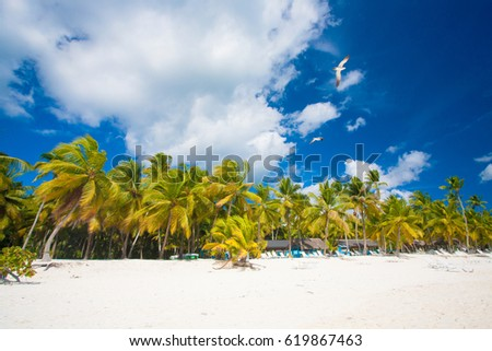 paradise beach in Punta Cana . Dominican Republic
