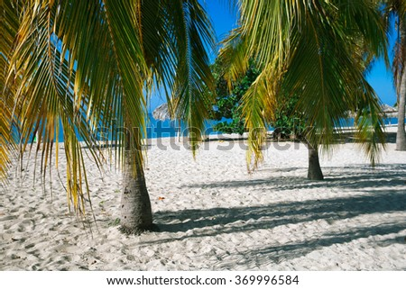 Paradise beach in the Caribbean with white sand and palm trees