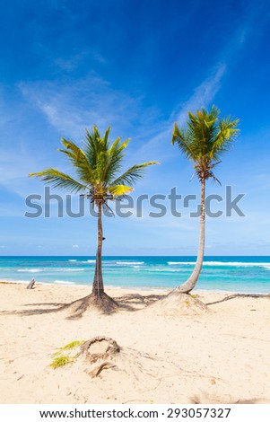 Paradise beach resort with palms and white sand