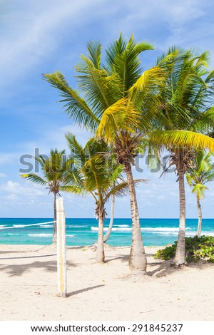 Paradise beach volleyball white sand court with palms and