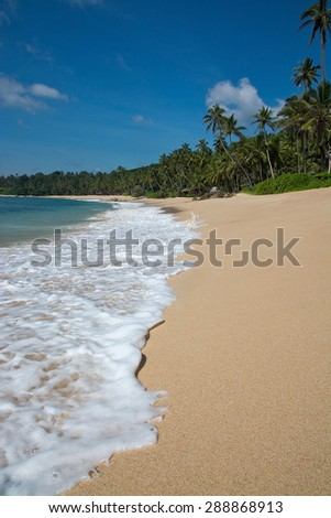 Paradise beach with green turquoise waves, coconut palm trees and fine untouched sand, Southern Province, Sri Lanka, Asia.