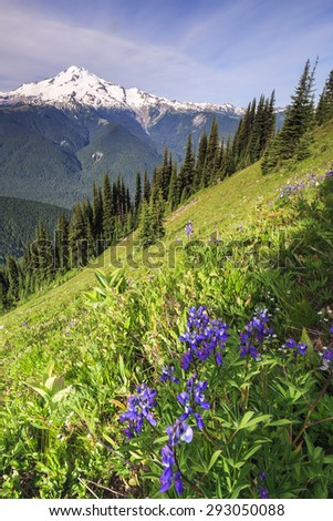 Paradise landscape of snowy mountain peak and purple flowers - stock photo