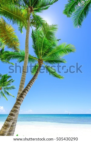 Paradise nature, sea on a tropical beach with green tree palm lights of a sun