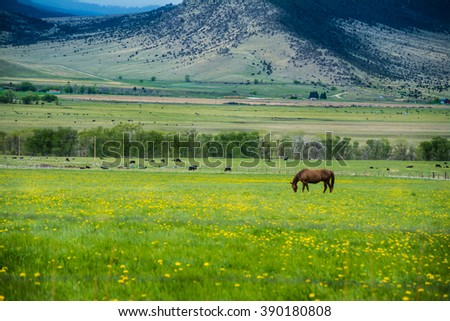 Paradise valley Montana horse grazing - stock photo