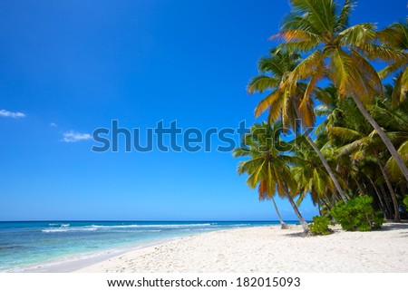 Paradise white sand beach with palms in tropical island