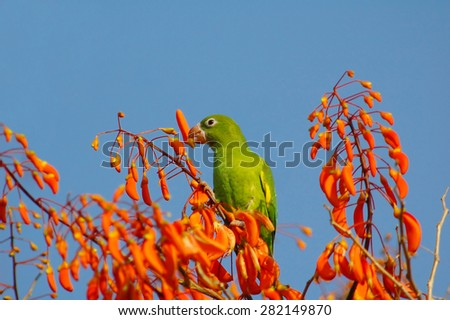 parakeet and flowers - stock photo