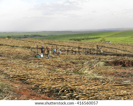 Parana, Brazil, July 29, 2003. Workers in manual sugar cane harvest in Parana State, Brazil