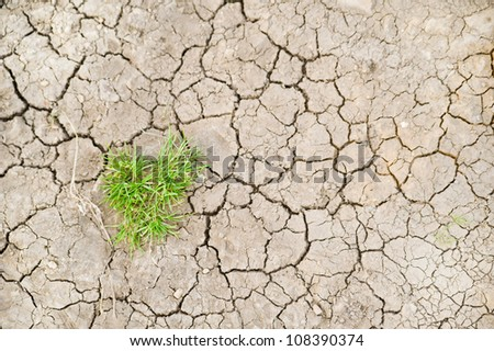 Parched ground - stock photo