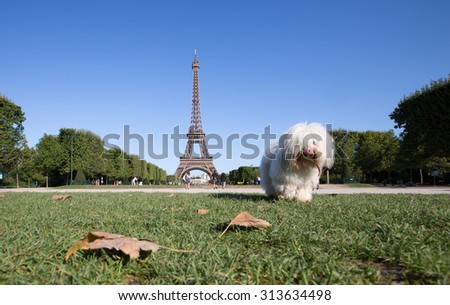 Paris Best Destinations in Europe with the dog.  - stock photo