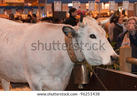 PARIS - FEBRUARY 26: Mascot Cow of the show at The Paris International Agricultural Show 2012 on February 26, 2012 in Paris