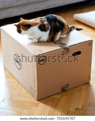 PARIS, FRANCE - AUG6: Cat inspecting multiple Amazon Prime boxes delivered by courier and left by the door by Hermes delivery courier