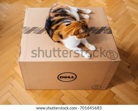 PARIS, FRANCE - AUG6: Cat inspecting new Dell Computer workstation cardboard box delivered by courier and left by the door