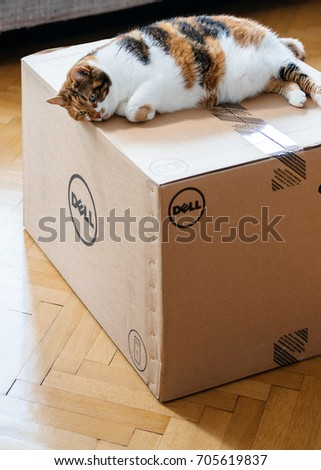 PARIS, FRANCE - AUG 6 2017: Cat sleeping on the new Dell Computer workstation cardboard box delivered by courier and left by the door