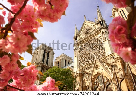 Paris, Notre Dame cathedral with blossomed tree - stock photo
