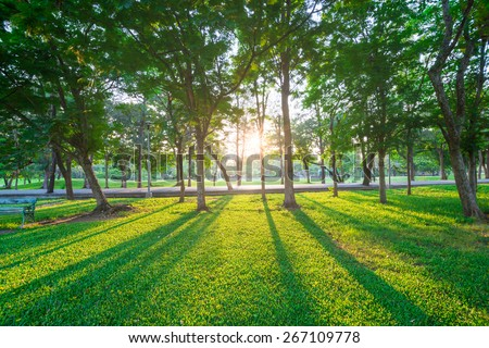 Park and recreation area in the city, Green field and tree - stock photo