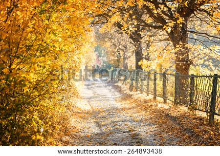 park autumn yellow leaves nature background