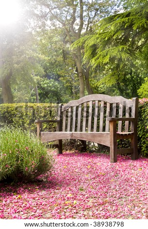 Park Bench Bathed in Sun Rays With Pink Blossom - stock photo