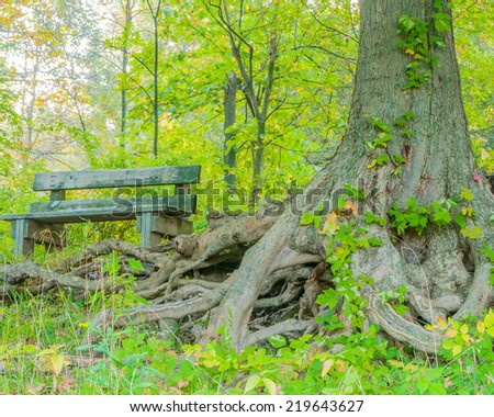 Park Bench in the woods with tree roots.