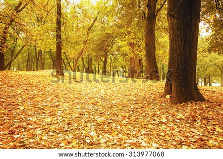 Park covered in fallen leaves in autumn  - stock photo