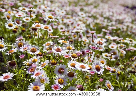 Park full of daisies on a sunny day