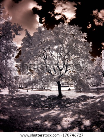 Park, Greater Poland, Poland. The infrared image.