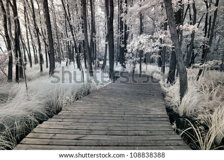 park in Poland. The infrared image - stock photo