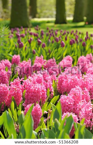 Park in springtime with blooming flowers and fresh green grass. - stock photo