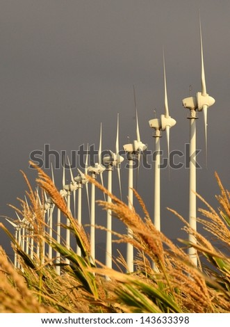 Park of wind turbines for electricity generation on gray background and corn spikes in unfocused foreground - stock photo