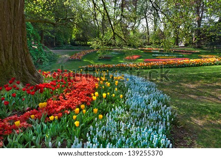 Park on a sunny day. Group of tulips and hyacinths. Spring landscape. - stock photo