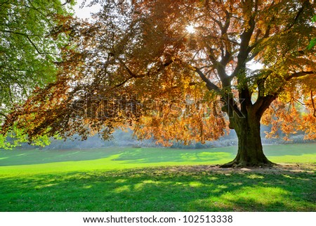 Park on a sunny day. Landscape. - stock photo