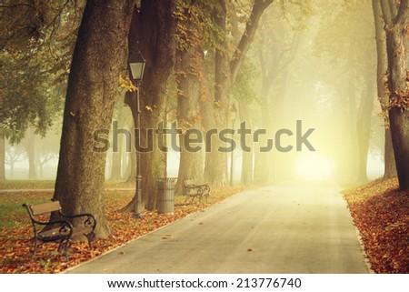 Park path on a foggy autumn day - stock photo