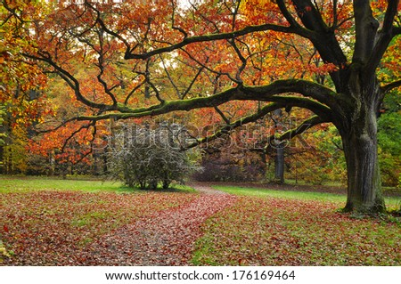 Park tree, colors of autumn nature