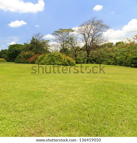 Park trees and blue sky - stock photo