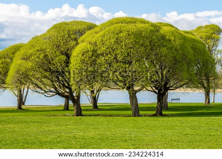 Park view with lush green trees - stock photo