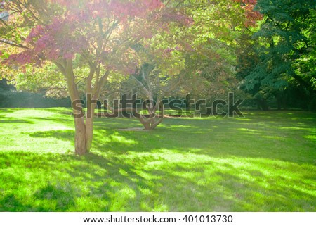 Park with green trees, lawns and paths. Toned - stock photo