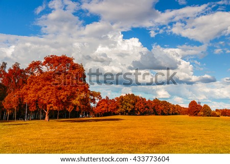 Park with meadow and forest. Red foliage and blue sky. Summer scene. - stock photo