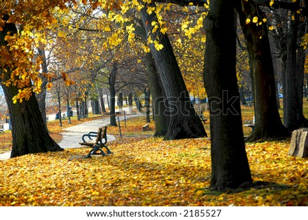 Park with old trees and recreation trail in the fall