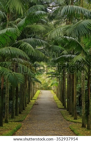 Park with palms and benches on Azores - stock photo