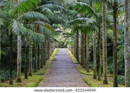 Park with palms and benches on Azores