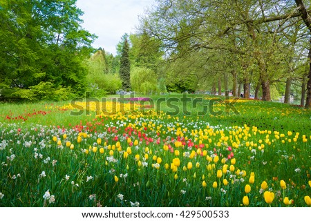 Park with trees, colorful tulips and other flowers